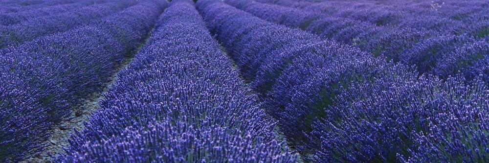 pompes funèbres michel leclerc lavande fleurs