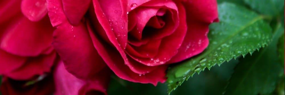 pompes funebres michel leclerc fleurs