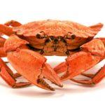 Arcachon: pour une bourriche d'huîtres ou un panier de crabes?